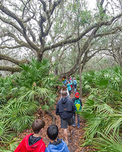 Environmental Educators will have the opportunity to teach maritime forest ecology, a study of the process of succession from the beach into the mature maritime forest.
