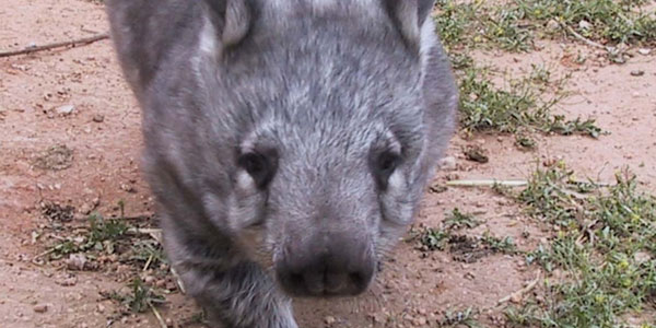 The Determination of a Wombat: Landing a job in National Parks & U.S. Forests